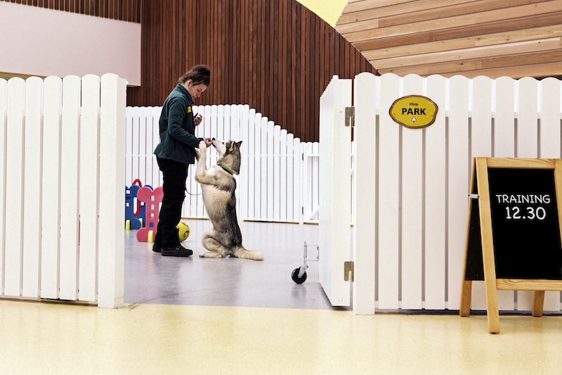 Photo: Dog trust design and interior