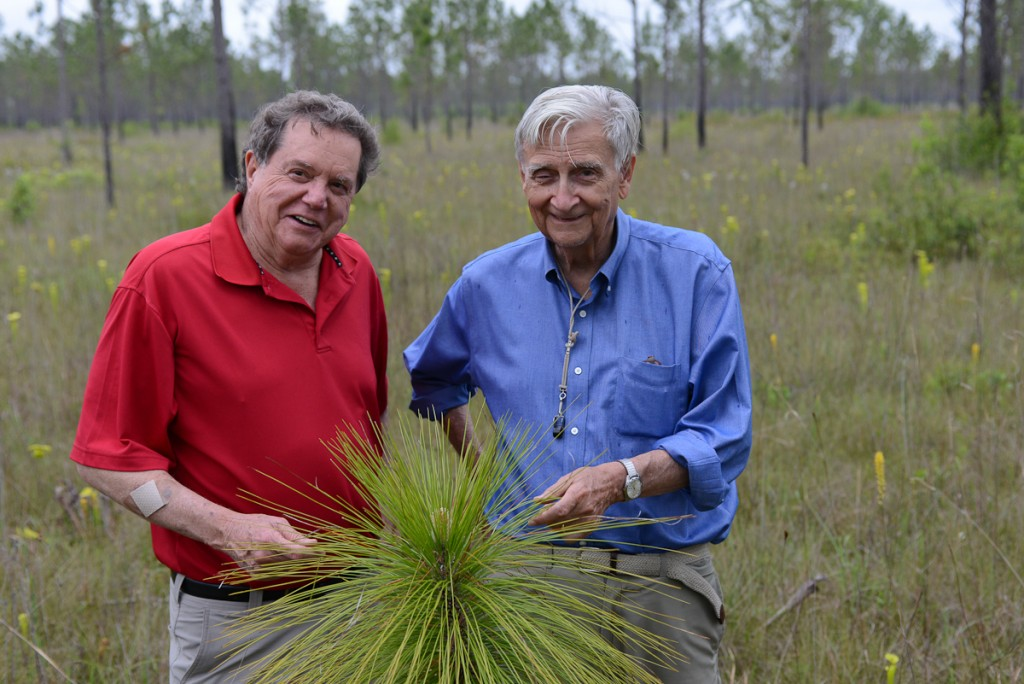 EO Wilson and MC Davis walk through a pitcher plant prarie on Davis' Nokuse Plantation which is 50,000 acres of conservation land.