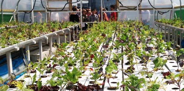 Queens-University-Urban-Agriculture-Laboratory-7