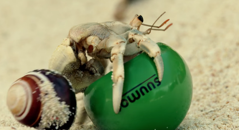 Shell-we-move-hermit-crabs