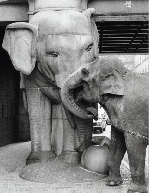 Thaia_the_elephant_at_the_Carlsberg_Elephant_gate_1979
