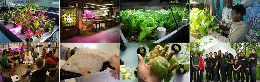 aquaponics-innovation-center1