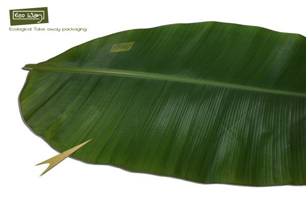 banana_leaves_01