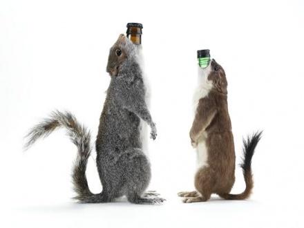 BrewDog «упаковал» пиво в чучела животных