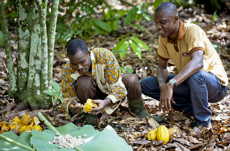 Nestlé Aims to Eliminate Child Labor in Cocoa Industry in Côte d ...